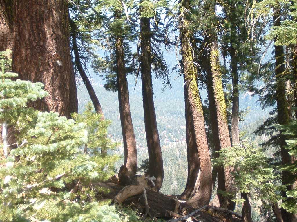Town of Alpine Thru Trees