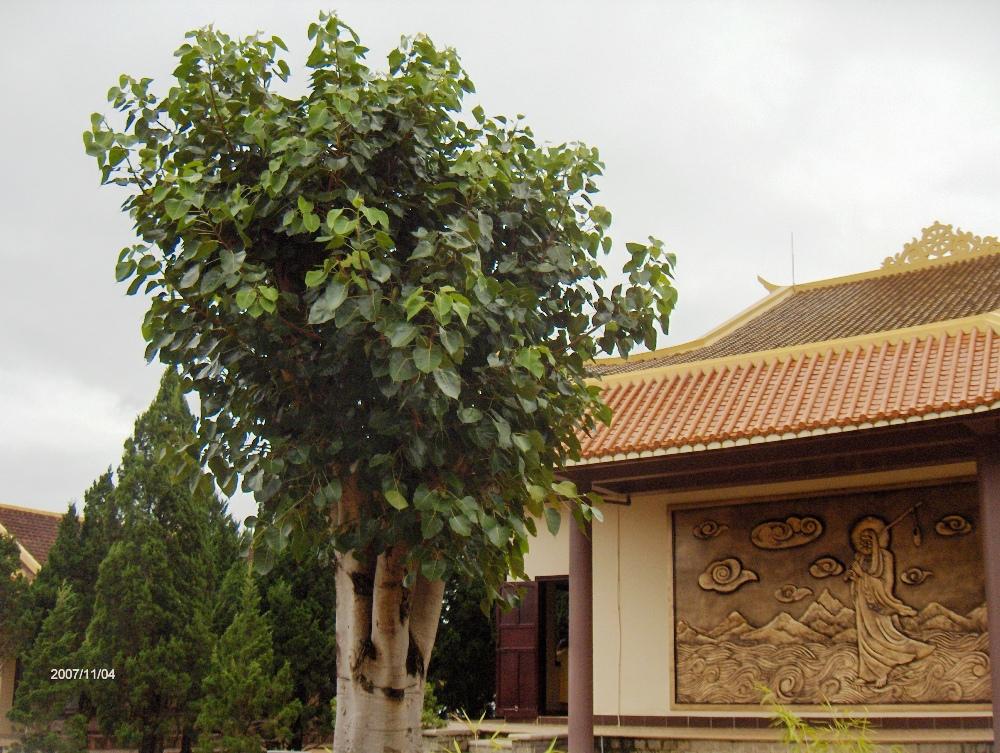VietnamCambodia 245