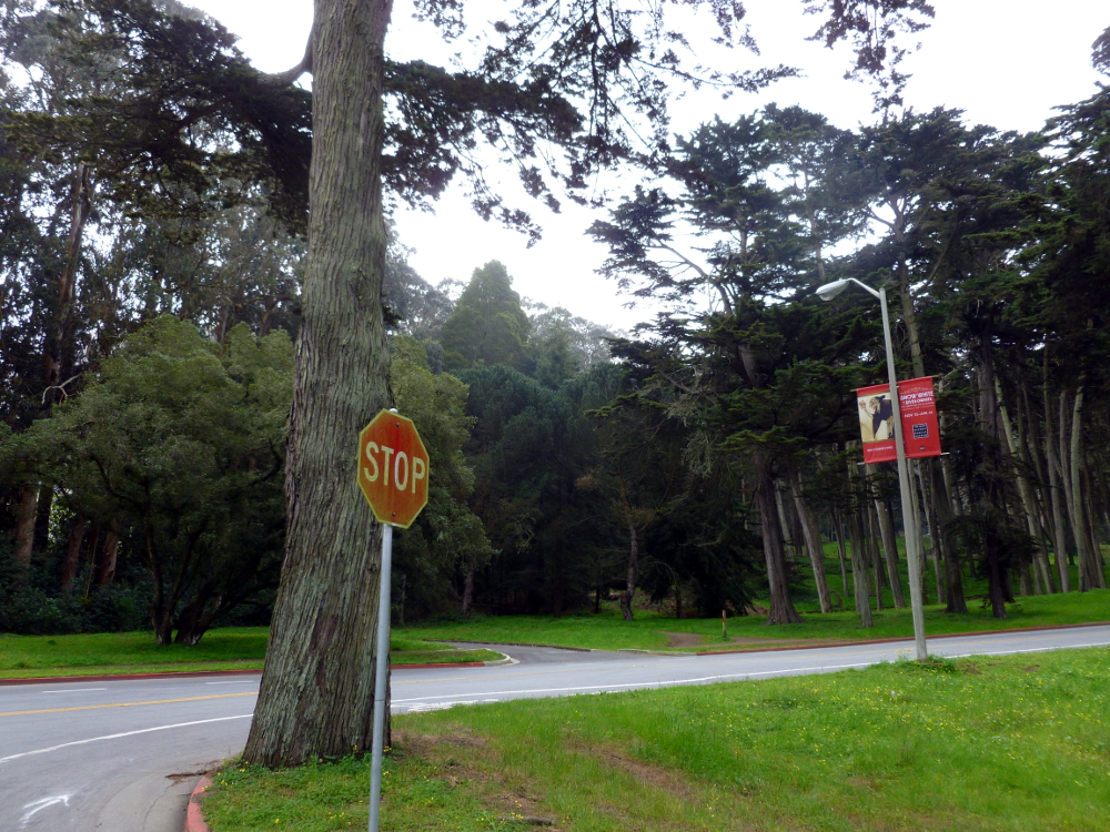 The grounds of the Presidio, San Francisco