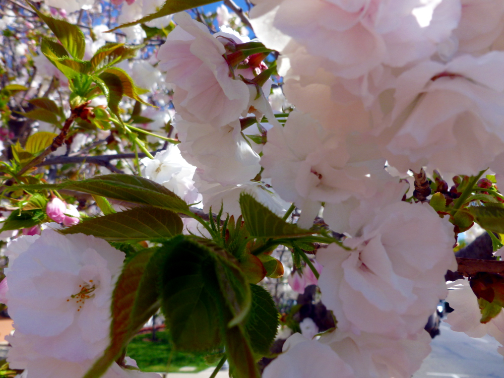 Close up blossoms