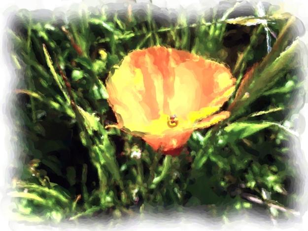 Poppy_Painting enhanced