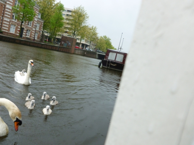 The Swans of Keizergracht 2