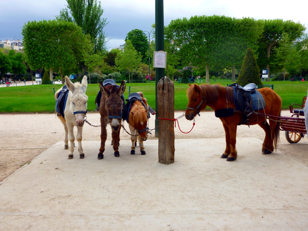 Small horses in Champs de Mars