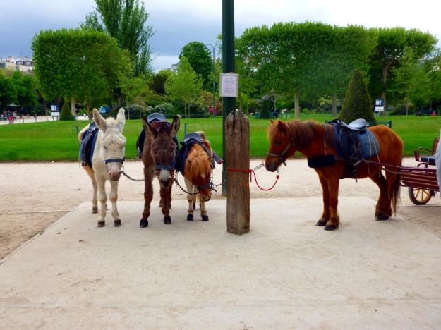 Small horses in Champs de Mars