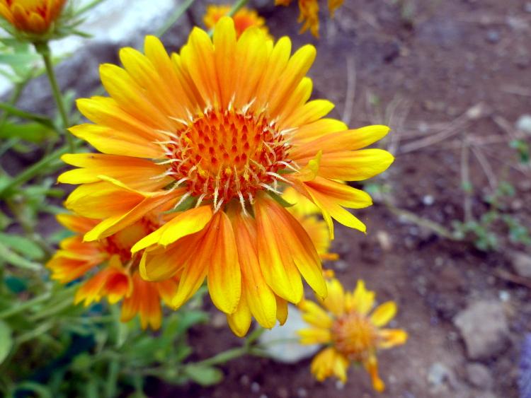 Orange flower enhanced