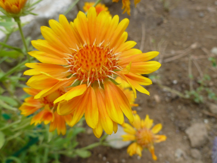Orange flower unenhanced