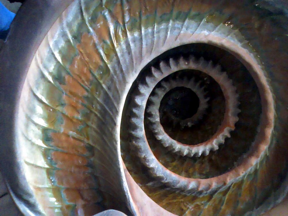 Spiral 001