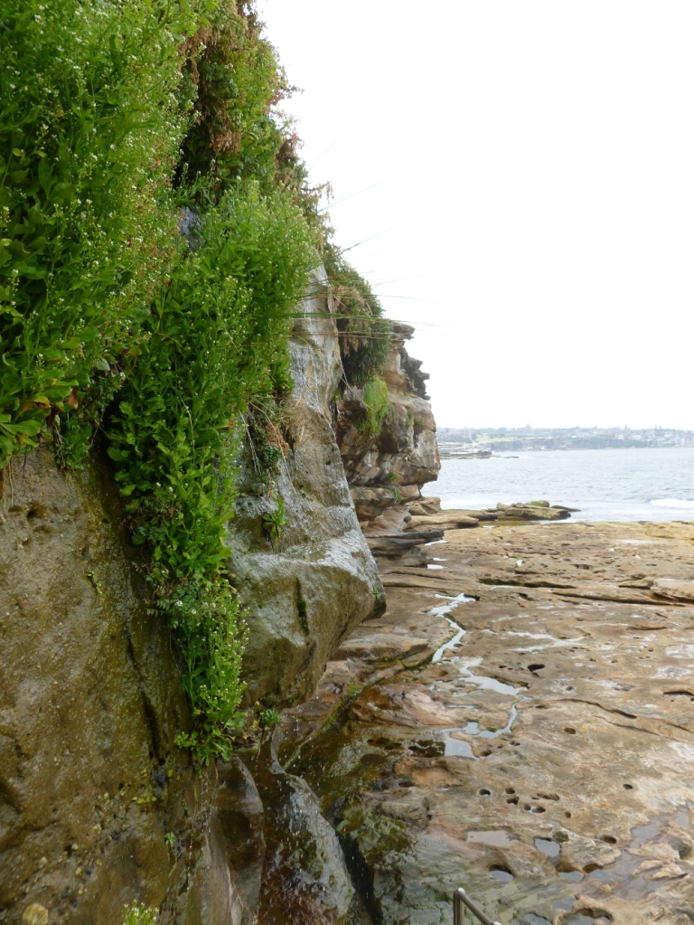 Cliffs by the rock pools near Coogee Beach