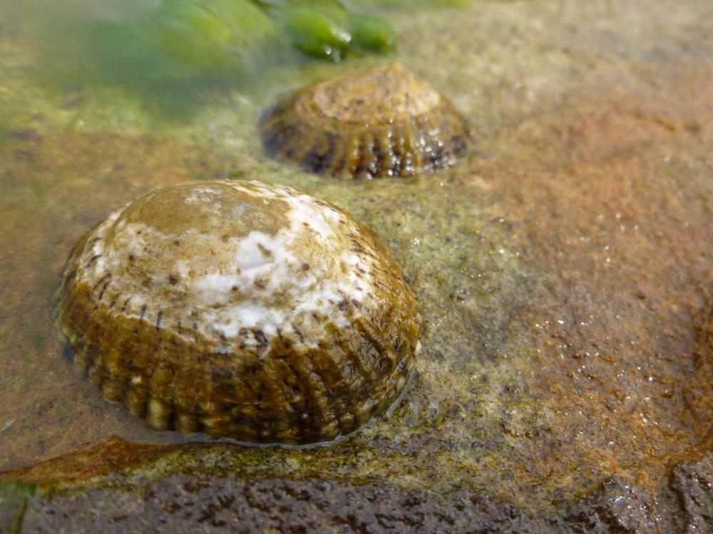 Shell macros