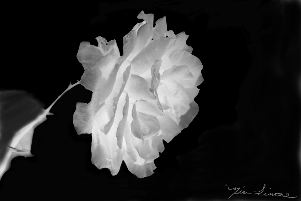 A rose small