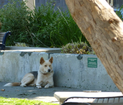 dog-in-Hayes-valley-san-francisco