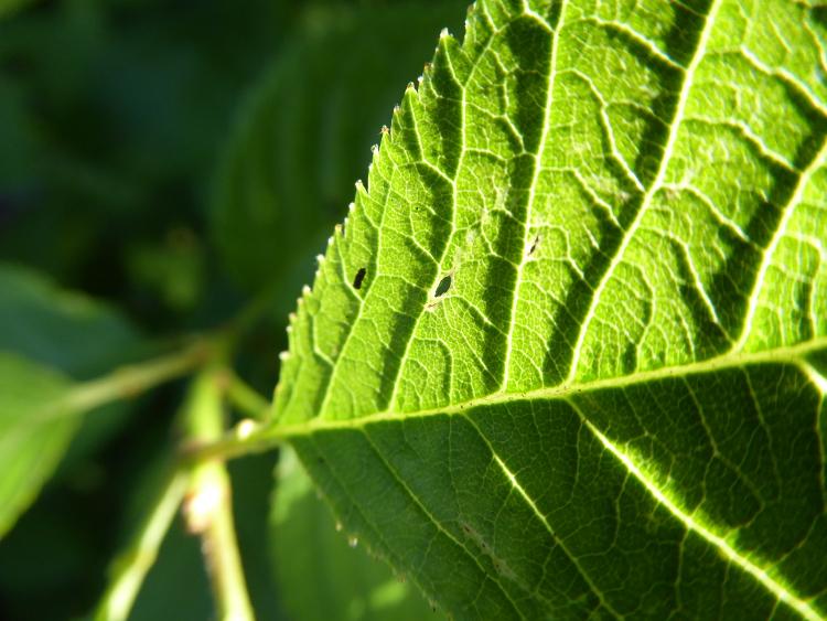 leaves-Panasonic