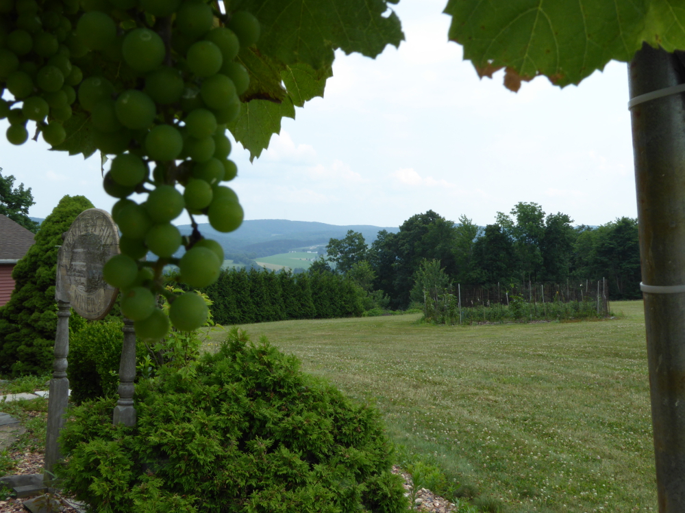 Demarest-winery