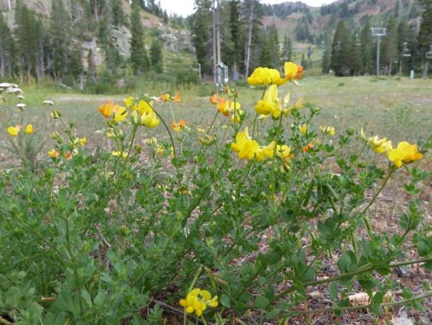 yellow-wildflowers-wordless-wednesday