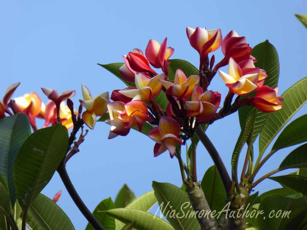 Bali-flowers-1