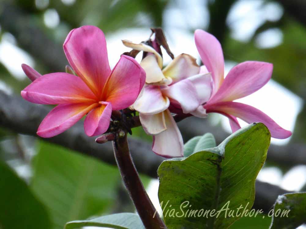 Bali-flowers-2