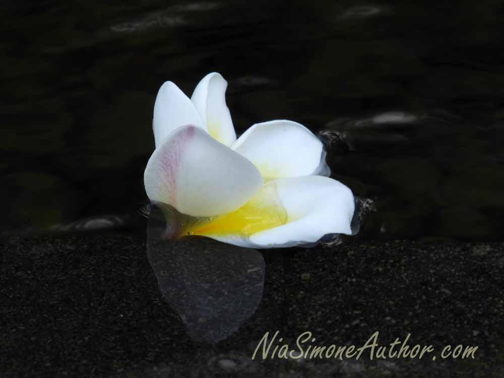 Bali-flowers-3