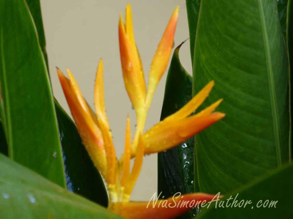 Bali-flowers-4