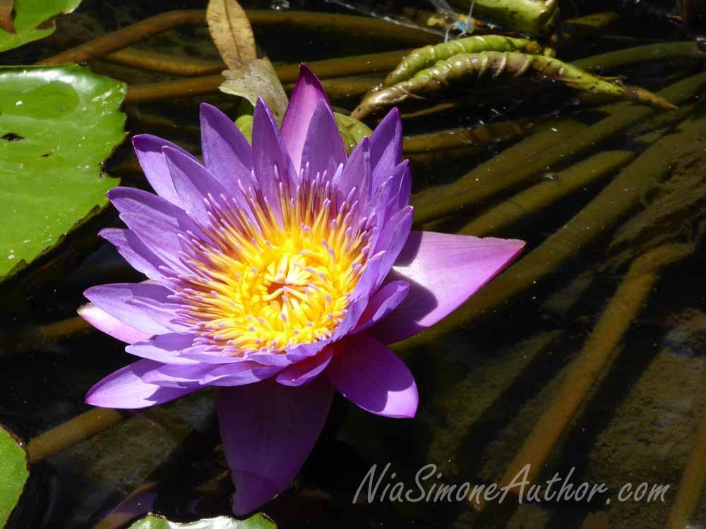 Bali-flowers-6