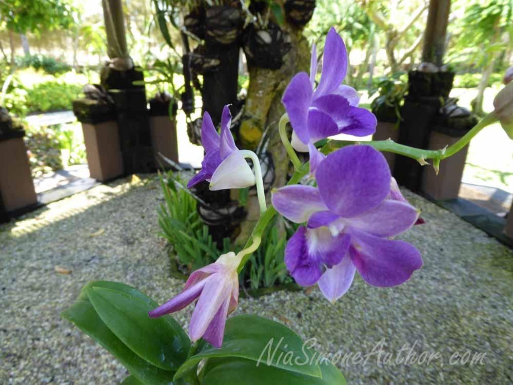 Bali-flowers-8