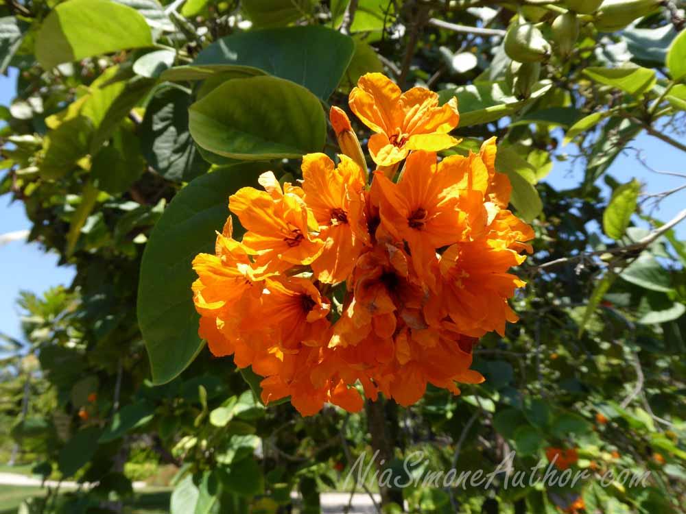 Bali-flowers-9