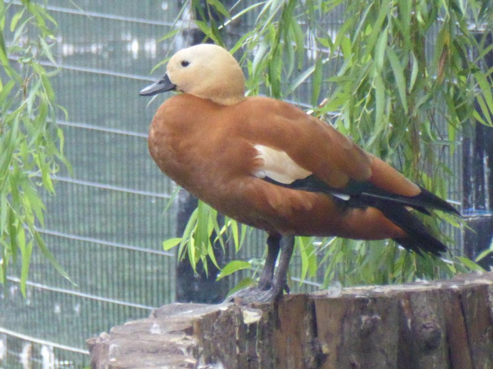 Zoo-bird