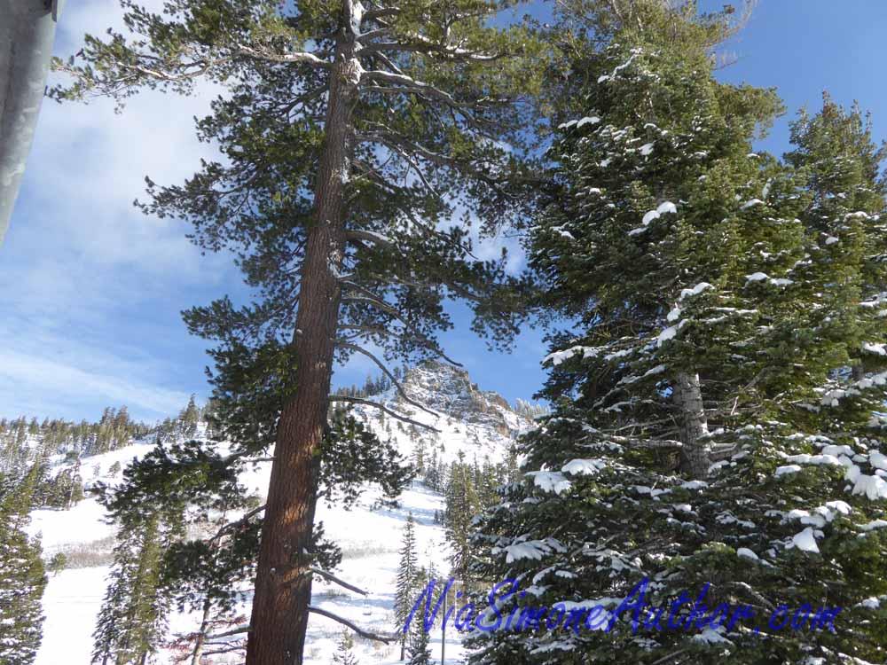 Alpine-Meadows-23