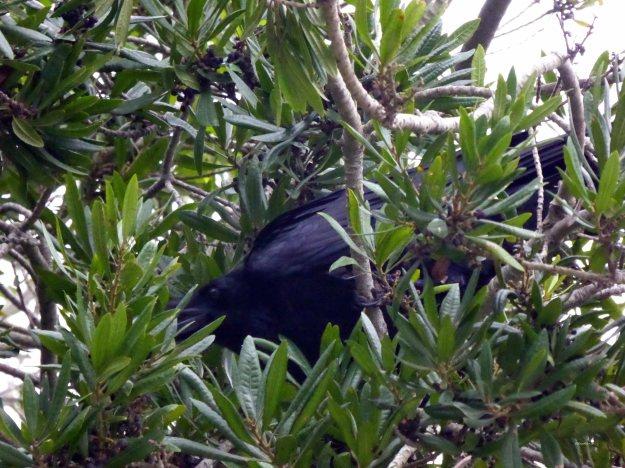 Mendocino-bird-life-1