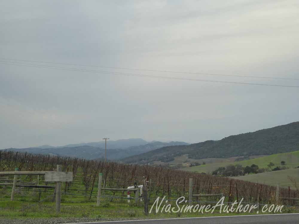 Sonoma-wine-tasting-7
