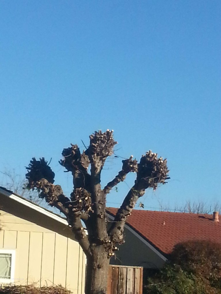Winter-trees-9