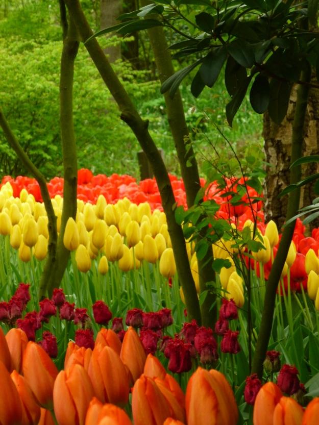 Keukenhoff Gardens