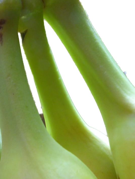Banana tops