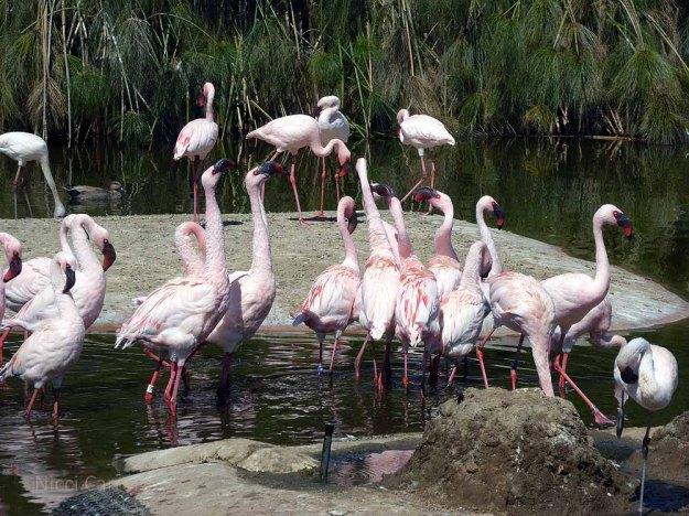 San-Diego-Safari-Zoo-10