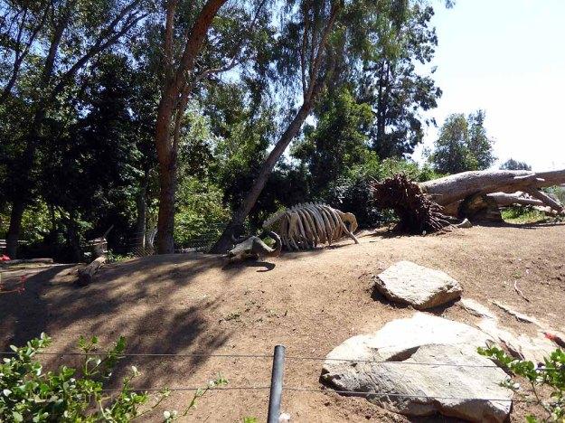 San-Diego-Safari-Zoo-16