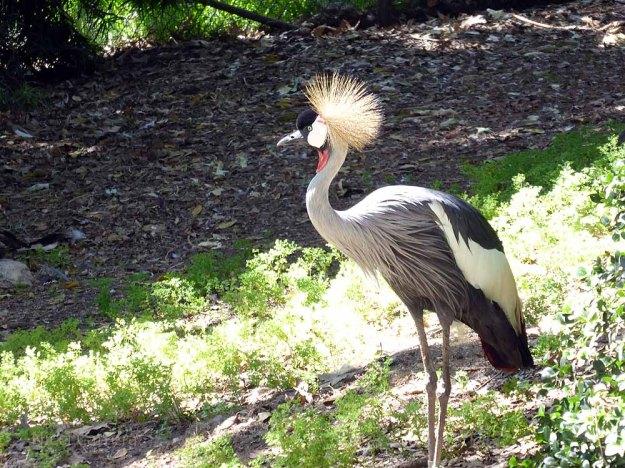 San-Diego-Safari-Zoo-3