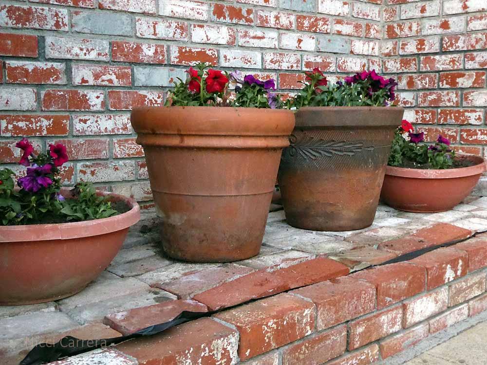 Flower-pots-3