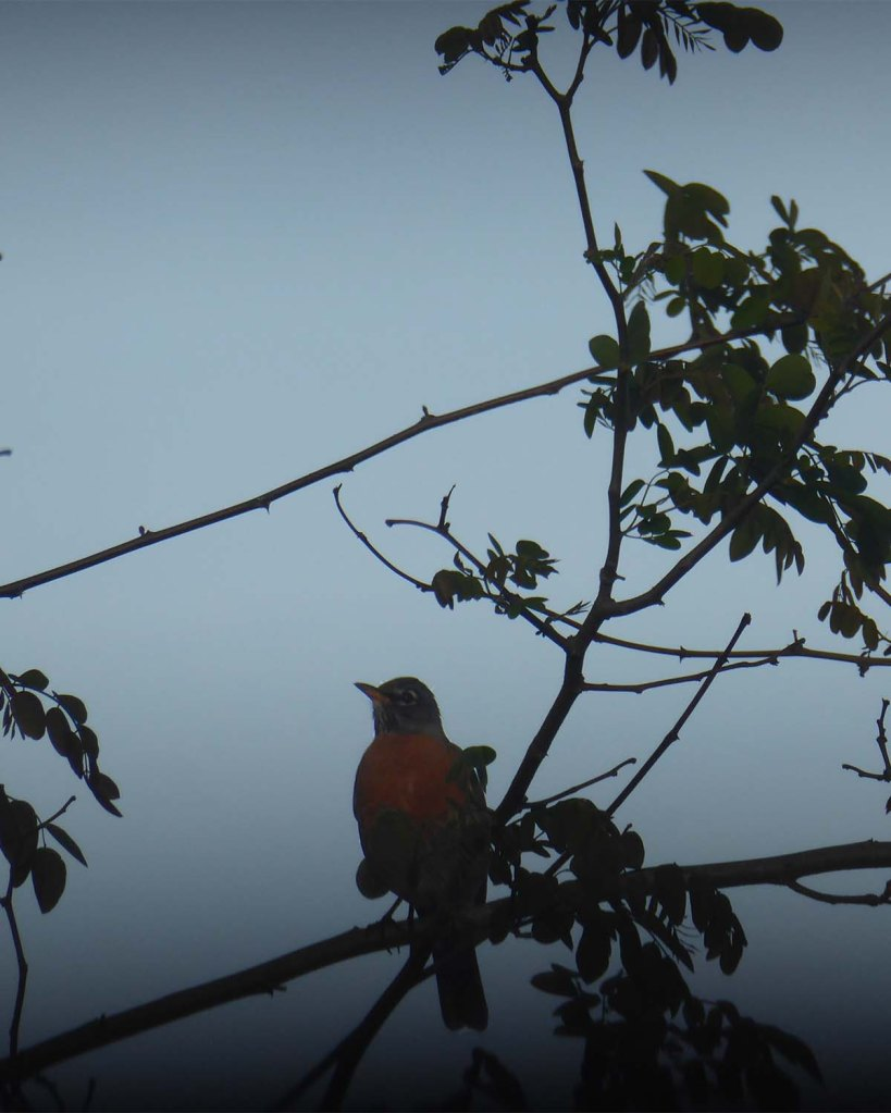 Robin-on-a-wire