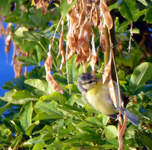 yellow-bird-in-Balestrand