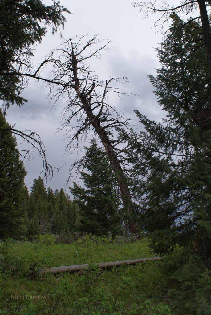 Tree drama