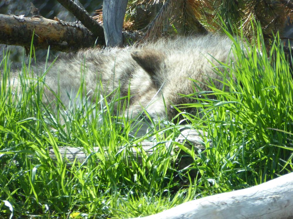 Wold sleeping 2