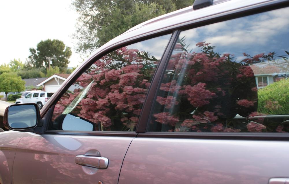 Reflection of oleander