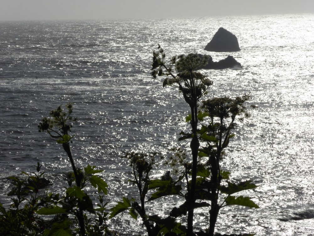 Weeds against the sea
