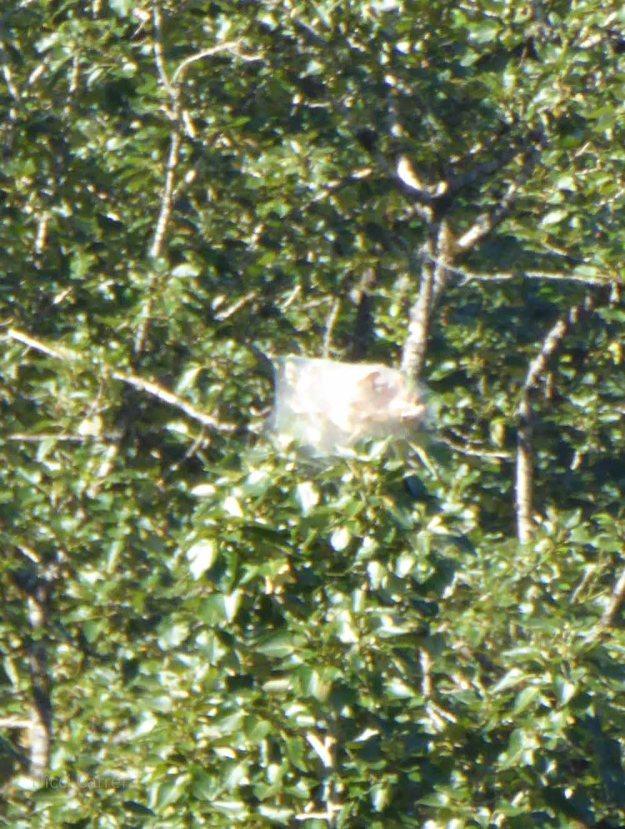 Eagle's nest?