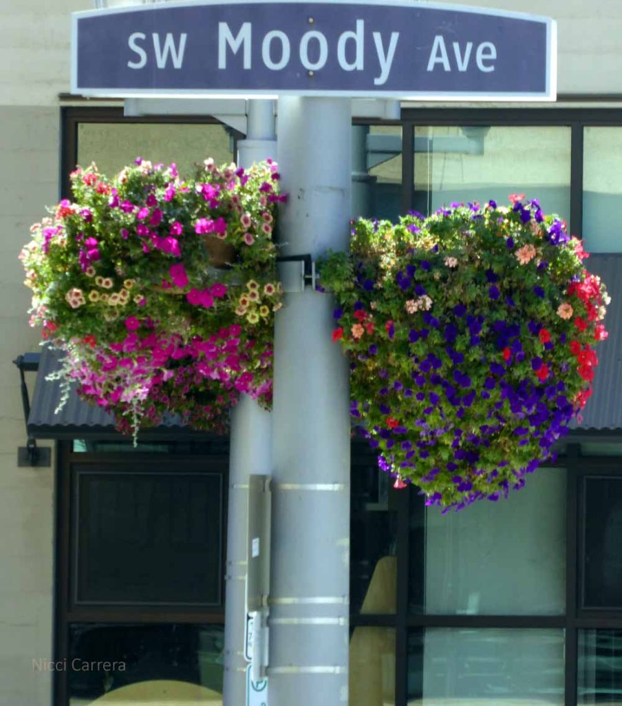 Portland has lots of these flower baskets, and I could live on this street!