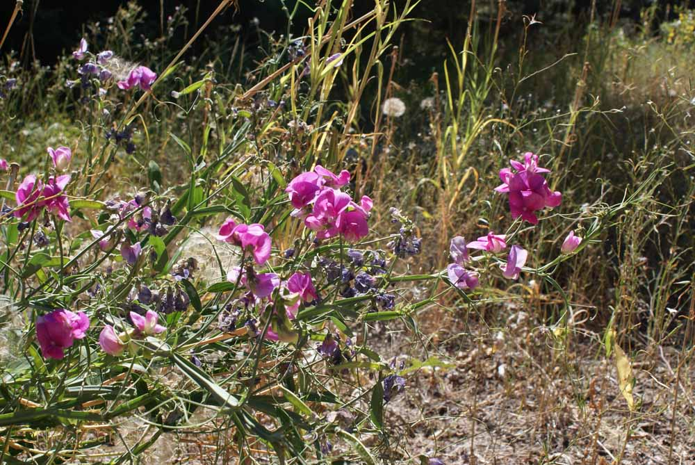 Wildflowers by the Truckee River