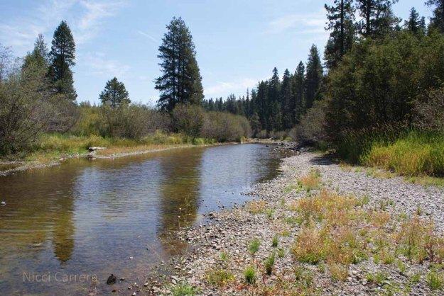 Runoff water in the Truckee River