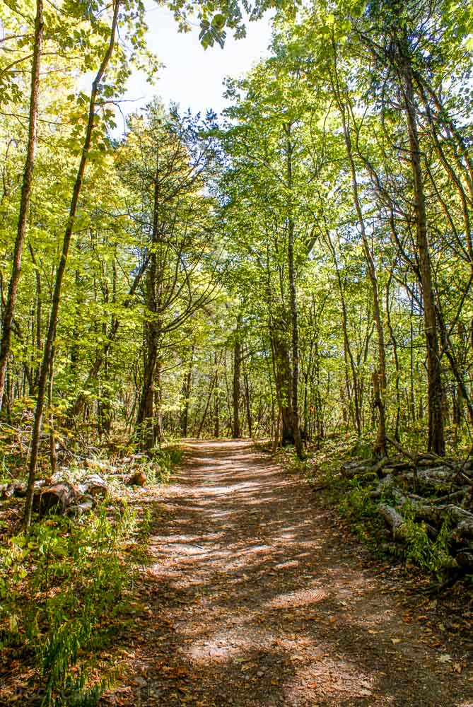 Forest trail in Red Rocks Park