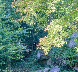 A creek at Mad River Glen ski area