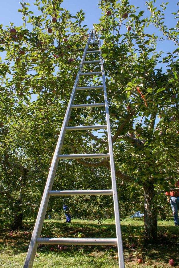 Vermont orchardsv