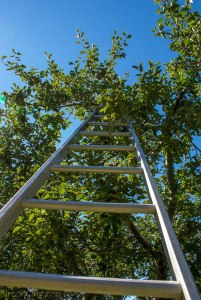 Artsy apple picking ladder shot